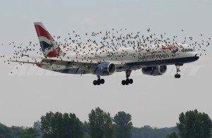 bird strike