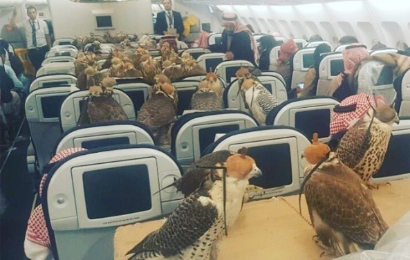 80-falcons-take-flight-with-other-passengers-onboard